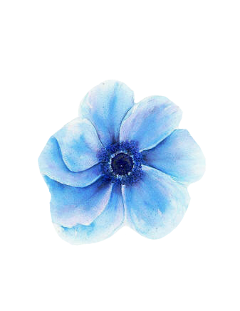 ⚠️DO NOT MAKE THIS AS YOUR OWN⚠️ 💙🌸Blue Watercolor Flower🌸💙 #Blue #Watercolor #Flower #transparent #icon #nature #art #sticker #freetoedit