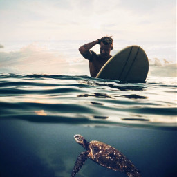 ocean halfway turtle surfer myedition
