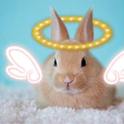 ircbabybunny babybunny freetoedit bunny rabbit