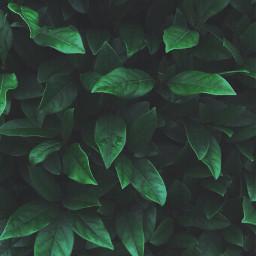 nature greenleaves waterdroplets bushes naturesbeauty freetoedit