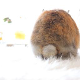 pccelebratingeaster celebratingeaster bunnytail bunny