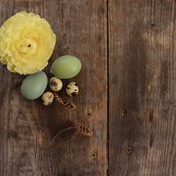 pccelebratingeaster celebratingeaster ranunculus flatlay eggs