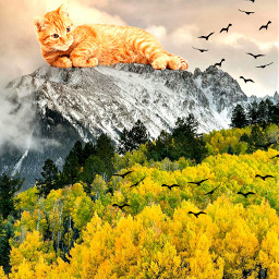 freetoedit cat flockofbirds vipshoutout
