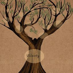 dcmyfamilytree myfamilytree freetoedit