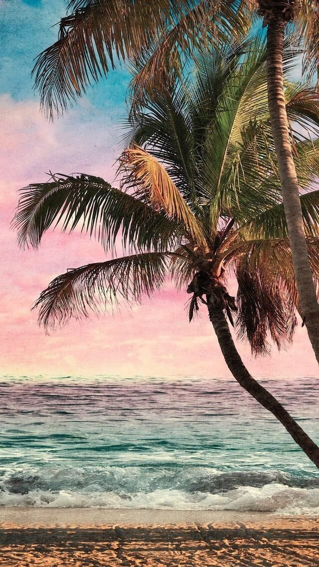freetoedit wallpapers wallpaper beach background palm...
