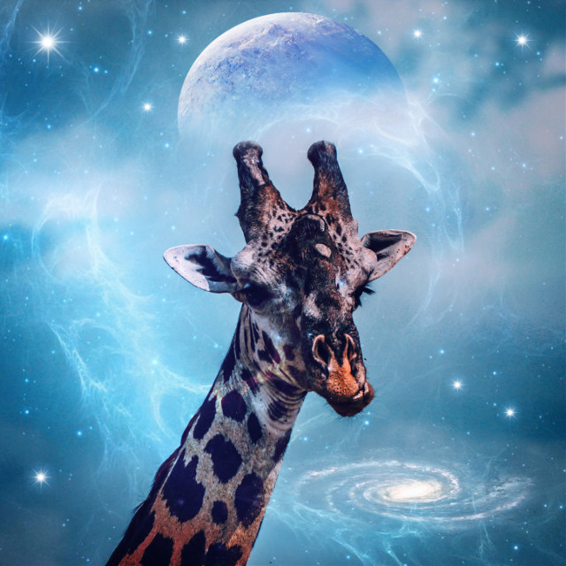 #freetoedit #giraffe #planet #galaxy #stars #nebula