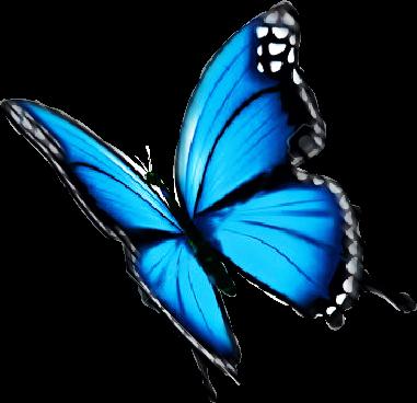 Butterfly Blue Nice Freetoedit