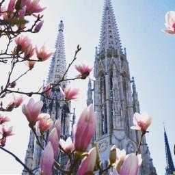 spring springishere magnolia magnoliatree church pcmonumentsandsites pcbeautifulday pcarchitecture pctakemebacktuesday pccity pcthebestplace pctourist freetoedit
