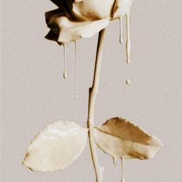 pink_roses edit yellow_roses follow pink yellow