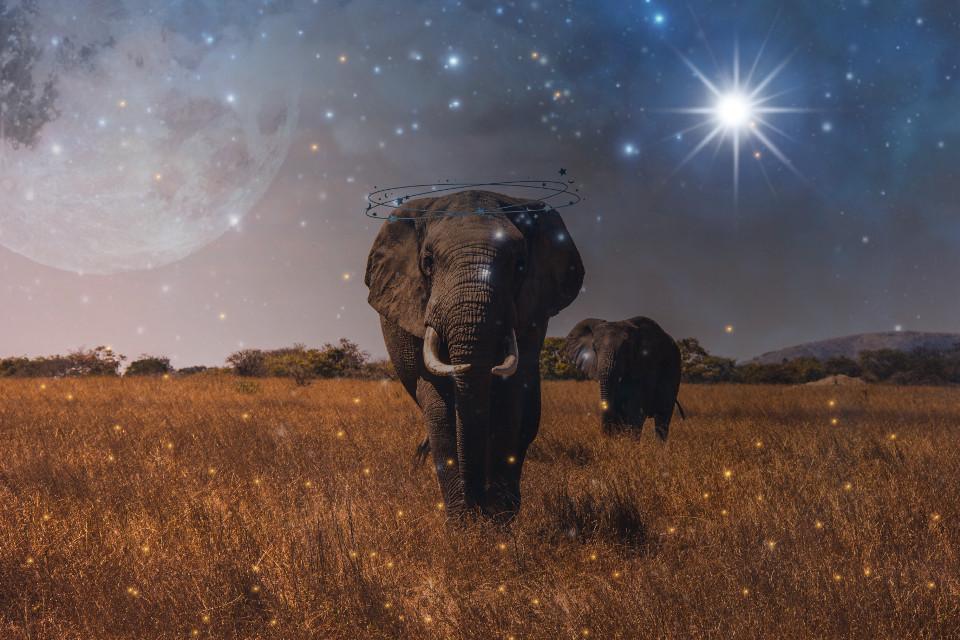 Instagram: dreaming.cloudd link in bio #freetoedit #elephant #remixit #photography #summer #moon #interesting #art #beach #italy #nature #night #galaxy #travel #netherlands #photo #picsart