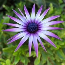 nature naturephotography flowers freetoedit