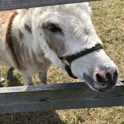 donkey cute animals farm fence freetoedit