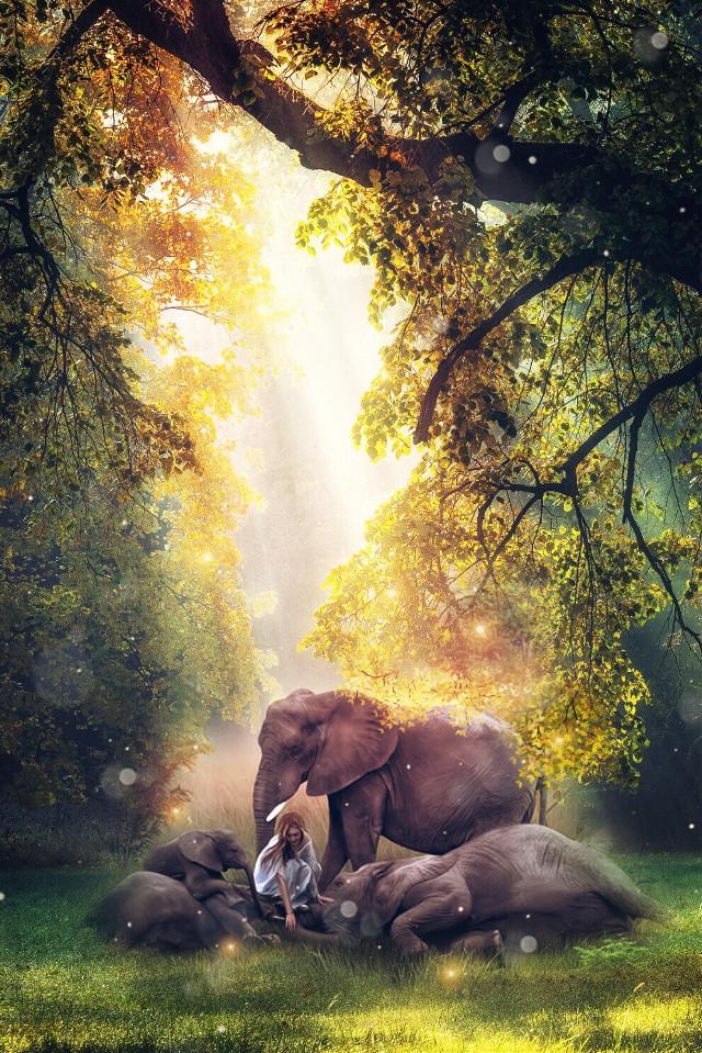 🐘🐘 #freetoedit #forest #elephant