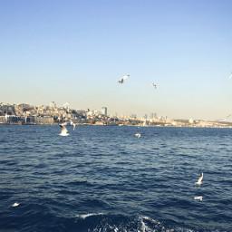 freetoedit sea seagull blue sky
