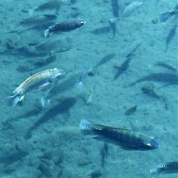 lake fish water blue
