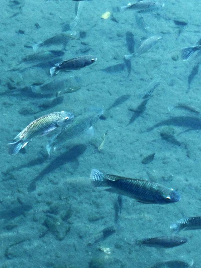 #lake #fish #water #blue