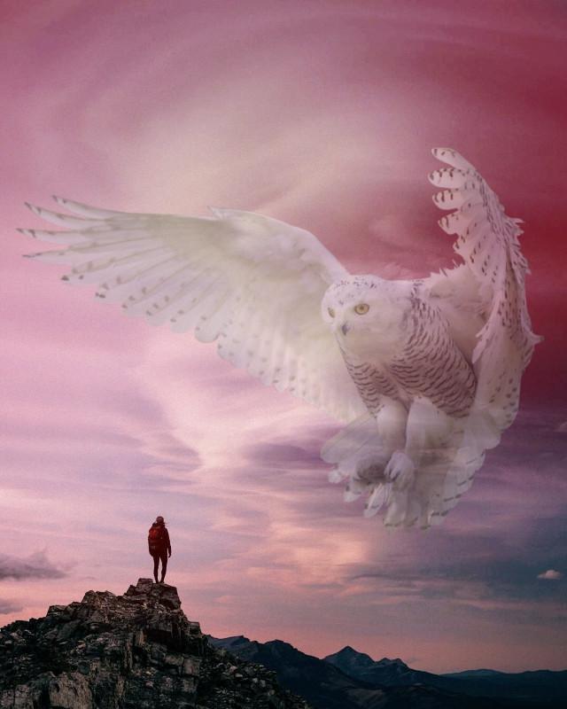 #freetoedit #owl
