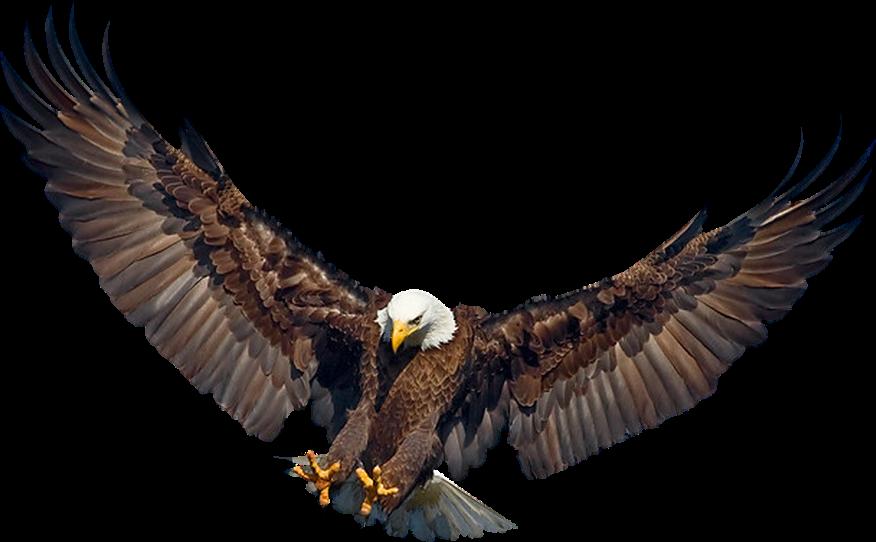 #eagle #bird #sky #space #clouds #birds #stars #star