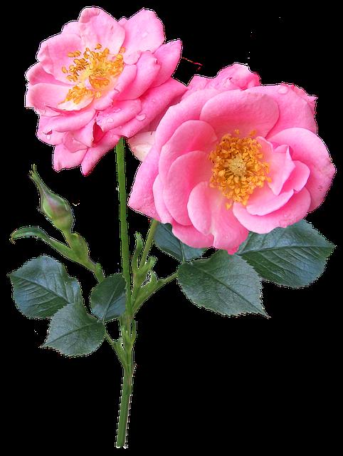 Flores Rosas Sticker By Lua