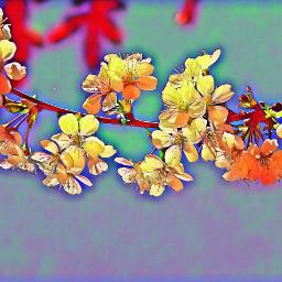 kwiatwiśni nature polishphotography