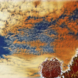 suwalszczyzna polishphotography bociany whitestorks nature
