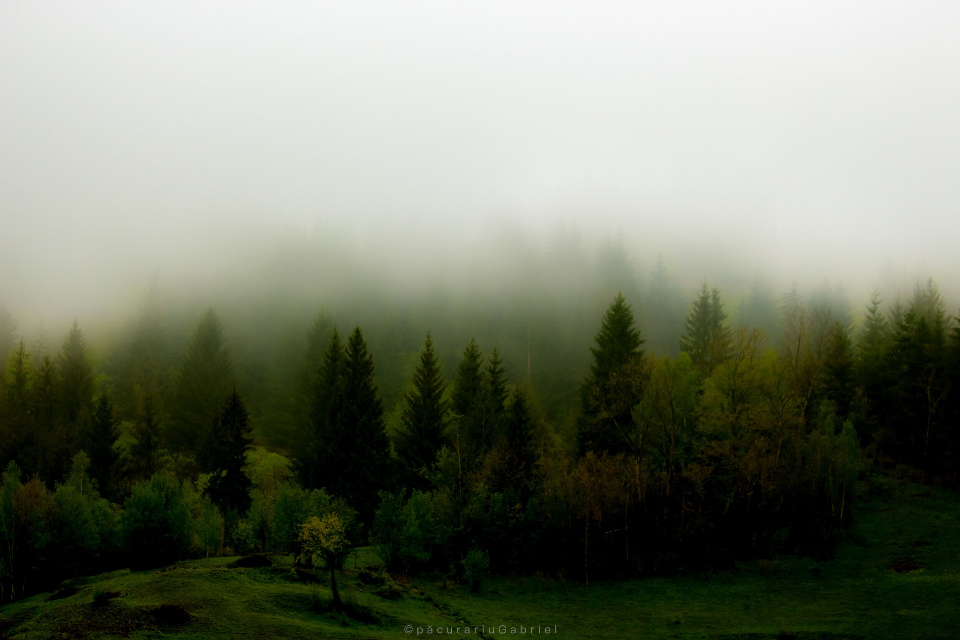 #forest #fog #green #trees  from @gabrielphotography