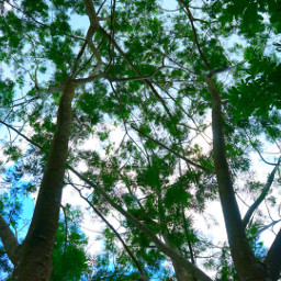 saveourtrees indonesianexplore indonesia