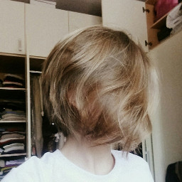 freetoedit shorthair fluffy hair shortysquad pcshorthair