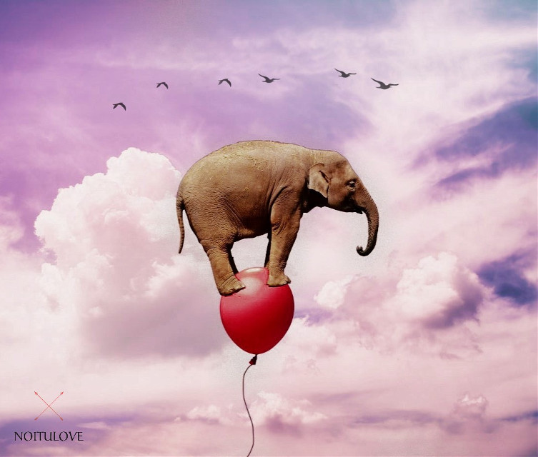 •pic by Unsplash . .   #freetoedit #surreal #surrealism #surreality #ecsurreal #picsart #picsarteffects #picsartedit #madewithpicsart #remixed #remixit #remix #elephant #balloon #red #cloudysky #cloud #pink #pastelpink #birds by @tigressasanchez1