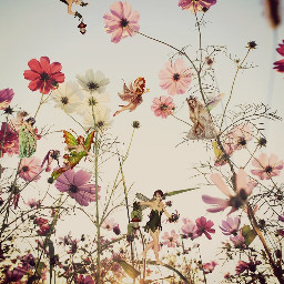 freetoedit fairy fairies wildflowers