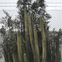 nature plants cactus bushes wallbackground