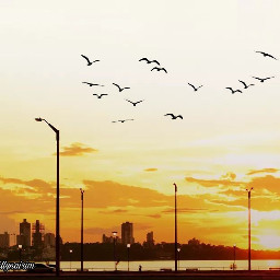 sunset freetoedit srcblackbirds blackbirds