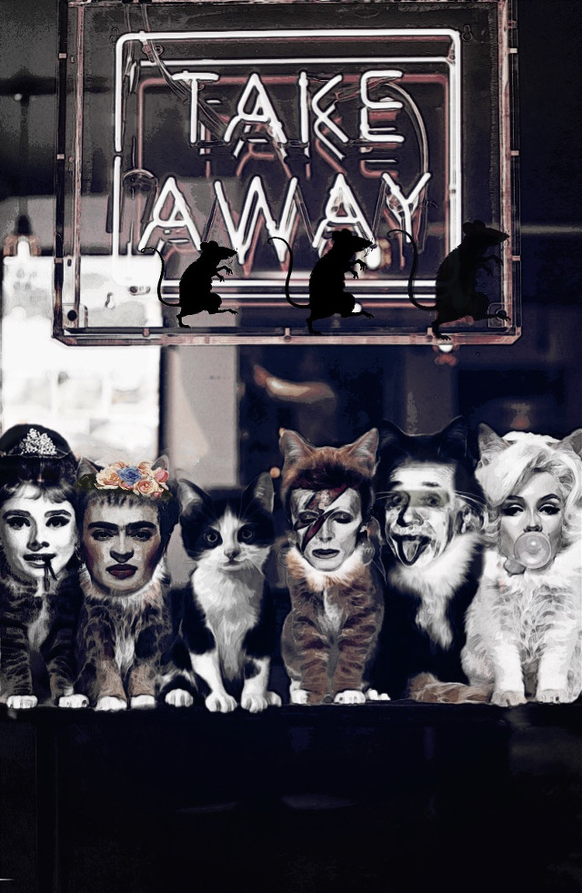 #freetoedit #dontask and please don' t hate me @indomagic i turned your #cute edit into a spectacle #meow 🐱