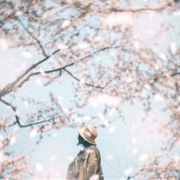 spring cherryblossom japan sky girl