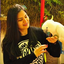 tennessee smokymountains parrot australian beautifulanimal