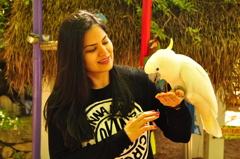 Inlove with him❣️ #tennessee #smokymountains #parrot #australian #beautifulanimal #animallover #nature #photography #travel