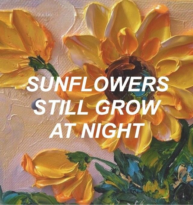 Rexorangecounty Sunflower Aesthetic Wallpaper Lyrics