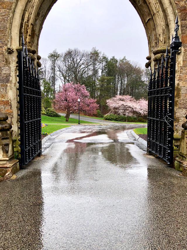 #freetoedit #spring #rain #blossoms #reflection #gates #arches