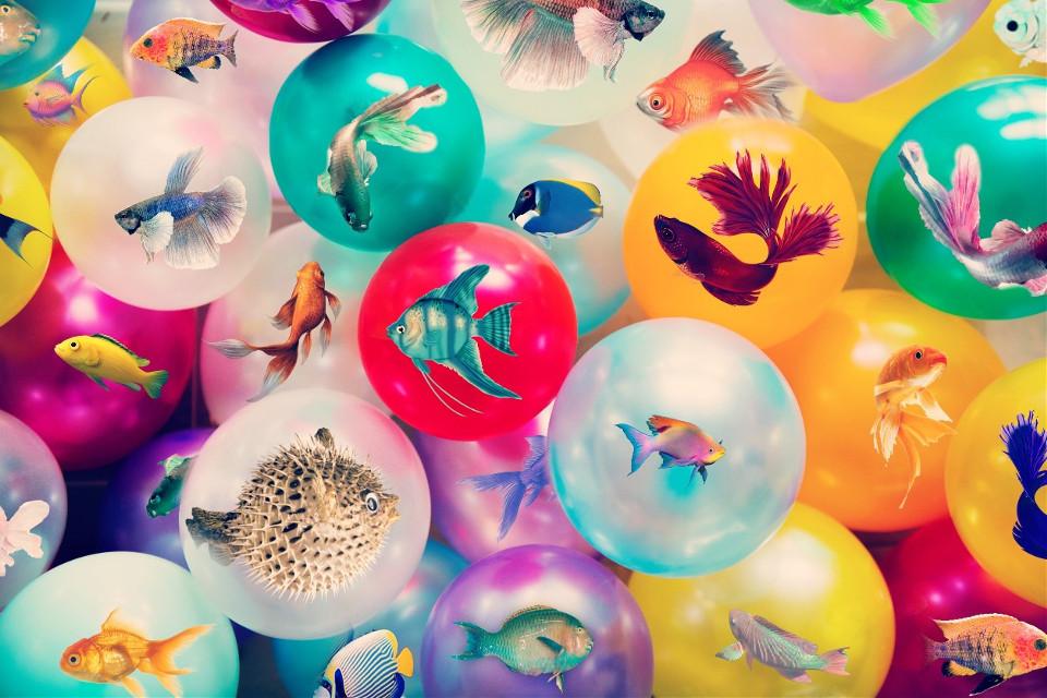#freetoedit #picsart #remixit #fishes #colours #balls