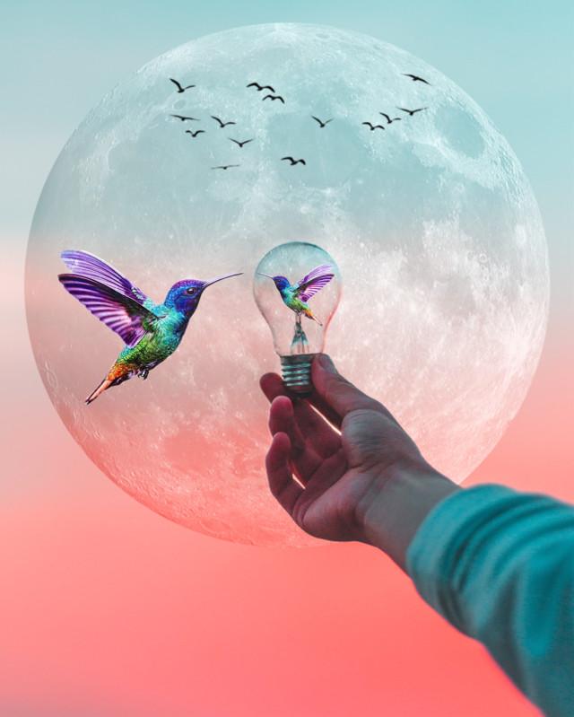 #freetoedit #colibri #moon #sunset