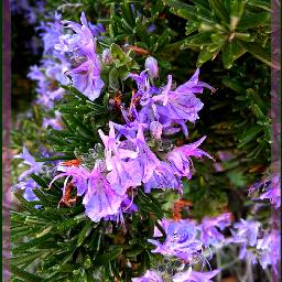 freetoedit myphoto springflowers mygarden romero