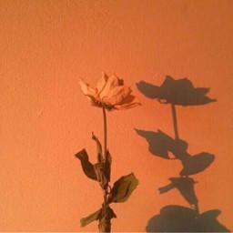 freetoedit orange flower aesthetic tumblr