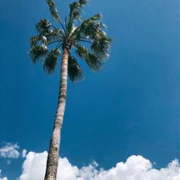 freetoedit nature beautifulspringmorning palmtree sunlight