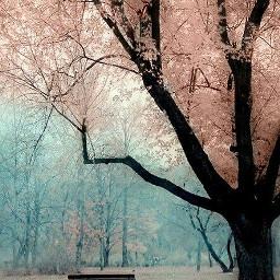arbol flores paisaje fotografia banco