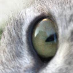 eye cateye cat