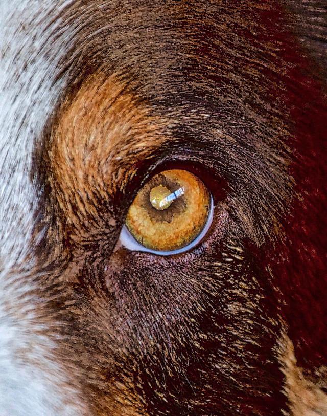 EyeWitness #AngelEyesImages#landscapephotographer#instagram#instagrammers#instagramers#picsart#picsartists#picsartist#dog#germanshepphard#nikon#nikonusa#nikond5300#nikond5300#lumixfz1000#travel#traveler#traveling#travelphotography#eyes#freetoedit
