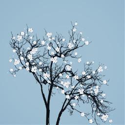 freetoedit givingtree beautiful cherryblossom flowerbrush