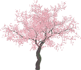 trees tree cherryblossoms blossoms pink