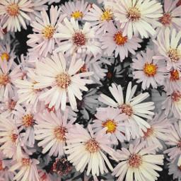freetoedit nature succulentflowers naturesbeauty ourworldisfullofbeautyinit