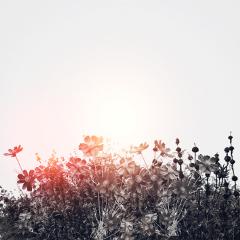 freetoedit doubleexposure flowers sun